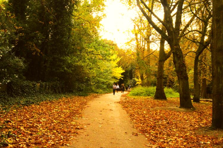 holland park kensington chelsea walking travel art photography united kingdom london forest